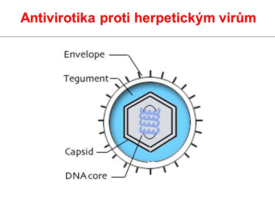 Aciklovir Inhibitor syntézy DNA –je nutná fosforilace virovou TK (200 x vyšší afinita vůči virové než savčí TK) –buněčné enzymy přeměňují aciklo GMP na aciklo GTP 40 - 100 x intenzivněji u infikovaných buněk než u zdravých
