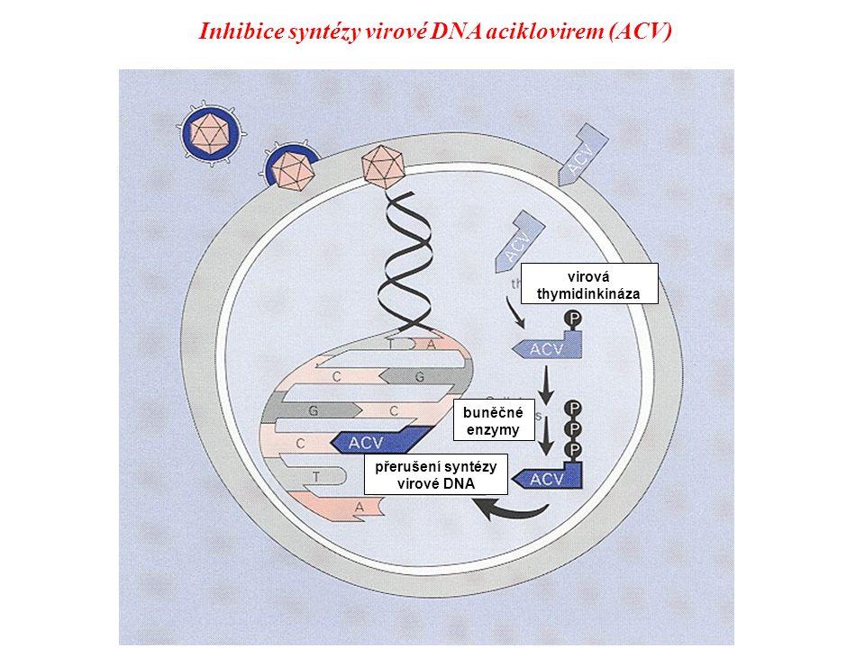Inhibice syntézy virové DNA aciklovirem x x Deoxyribonukleosidy Aciklovir Virová thymidin kináza popříp.