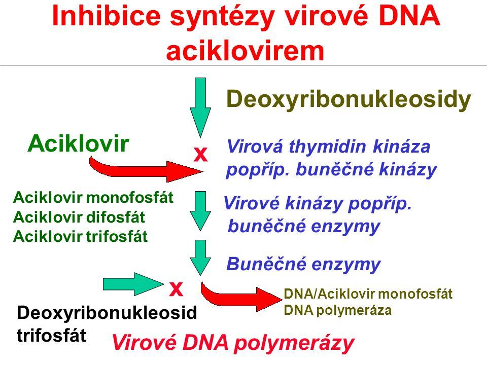 Inhibice syntézy virové DNA aciklovirem x x Deoxyribonukleosidy Aciklovir Virová thymidin kináza popříp. buněčné kinázy Aciklovir monofosfát Aciklovir