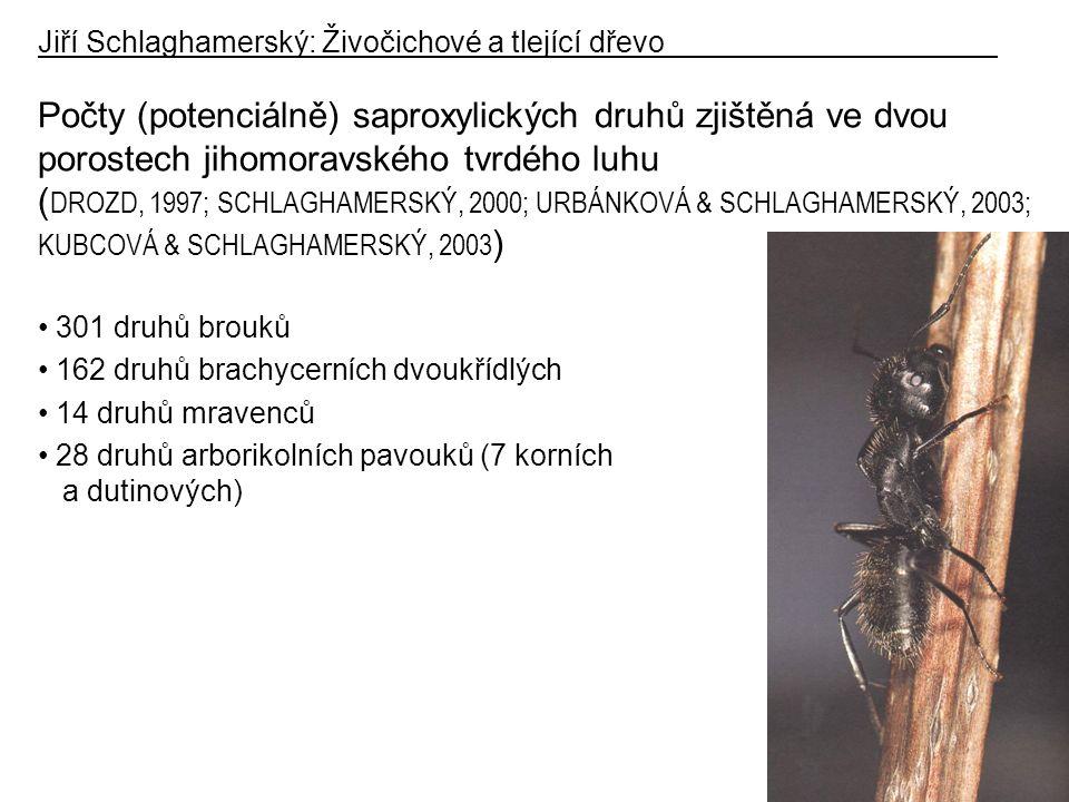 Počty (potenciálně) saproxylických druhů zjištěná ve dvou porostech jihomoravského tvrdého luhu ( DROZD, 1997; SCHLAGHAMERSKÝ, 2000; URBÁNKOVÁ & SCHLAGHAMERSKÝ, 2003; KUBCOVÁ & SCHLAGHAMERSKÝ, 2003 ) 301 druhů brouků 162 druhů brachycerních dvoukřídlých 14 druhů mravenců 28 druhů arborikolních pavouků (7 korních a dutinových) Jiří Schlaghamerský: Živočichové a tlející dřevo