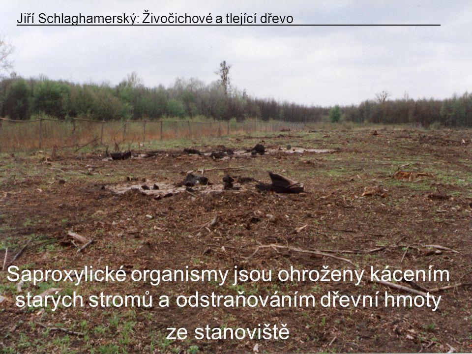 Saproxylické organismy jsou ohroženy kácením starých stromů a odstraňováním dřevní hmoty ze stanoviště Jiří Schlaghamerský: Živočichové a tlející dřevo