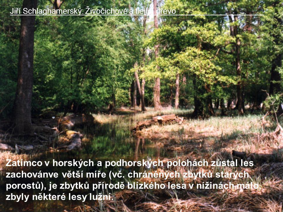 Jiří Schlaghamerský: Živočichové a tlející dřevo Zatímco v horských a podhorských polohách zůstal les zachovánve větší míře (vč.