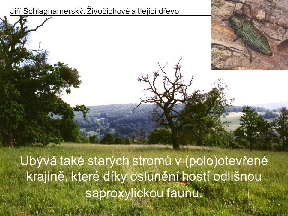 Ubývá také starých stromů v (polo)otevřené krajině, které díky oslunění hostí odlišnou saproxylickou faunu.