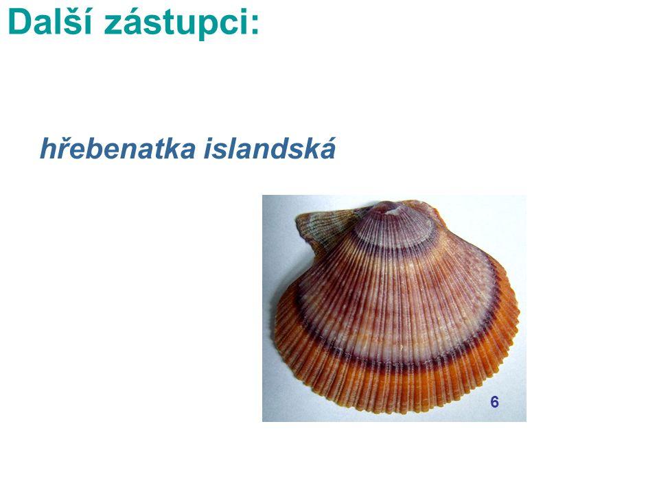 hřebenatka islandská 6 Další zástupci: