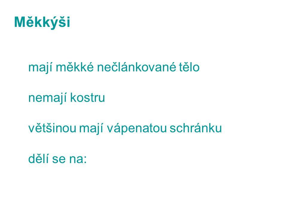 - PLŽE - MLŽE - HLAVONOŽCE