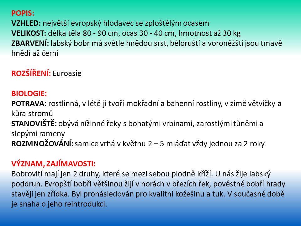 POPIS: VZHLED: největší evropský hlodavec se zploštělým ocasem VELIKOST: délka těla 80 - 90 cm, ocas 30 - 40 cm, hmotnost až 30 kg ZBARVENÍ: labský bobr má světle hnědou srst, běloruští a voroněžští jsou tmavě hnědí až černí ROZŠÍŘENÍ: Euroasie BIOLOGIE: POTRAVA: rostlinná, v létě ji tvoří mokřadní a bahenní rostliny, v zimě větvičky a kůra stromů STANOVIŠTĚ: obývá nížinné řeky s bohatými vrbinami, zarostlými tůněmi a slepými rameny ROZMNOŽOVÁNÍ: samice vrhá v květnu 2 – 5 mláďat vždy jednou za 2 roky VÝZNAM, ZAJÍMAVOSTI: Bobrovití mají jen 2 druhy, které se mezi sebou plodně kříží.
