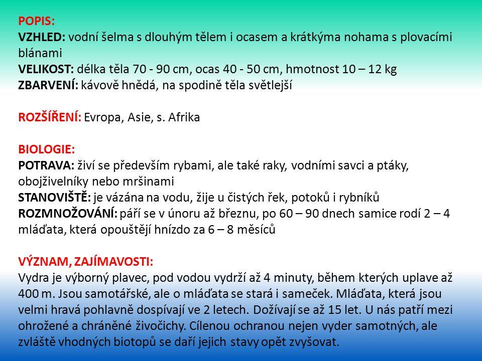 POPIS: VZHLED: vodní šelma s dlouhým tělem i ocasem a krátkýma nohama s plovacími blánami VELIKOST: délka těla 70 - 90 cm, ocas 40 - 50 cm, hmotnost 10 – 12 kg ZBARVENÍ: kávově hnědá, na spodině těla světlejší ROZŠÍŘENÍ: Evropa, Asie, s.