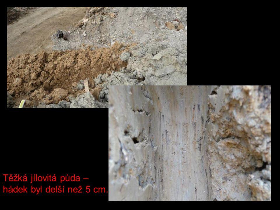 Těžká jílovitá půda – hádek byl delší než 5 cm.