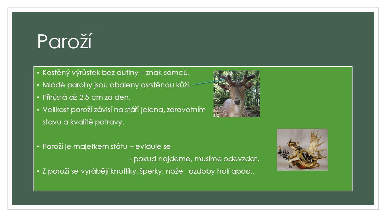 Paroží Kostěný výrůstek bez dutiny – znak samců. Mladé parohy jsou obaleny osrstěnou kůží.