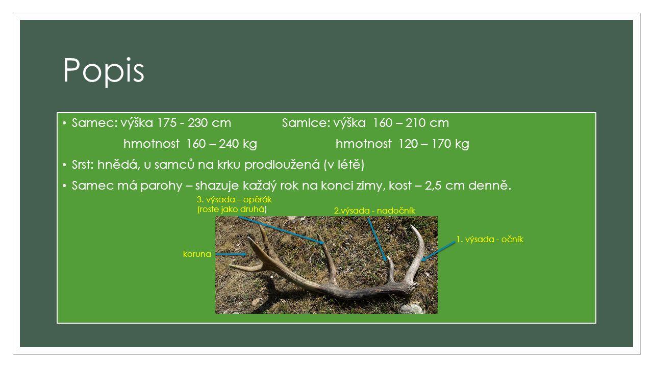 Popis Samec: výška 175 - 230 cm Samice: výška 160 – 210 cm hmotnost 160 – 240 kg hmotnost 120 – 170 kg Srst: hnědá, u samců na krku prodloužená (v létě) Samec má parohy – shazuje každý rok na konci zimy, kost – 2,5 cm denně.