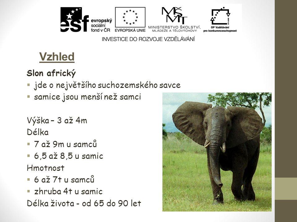 Vzhled Slon africký  jde o největšího suchozemského savce  samice jsou menší než samci Výška – 3 až 4m Délka  7 až 9m u samců  6,5 až 8,5 u samic