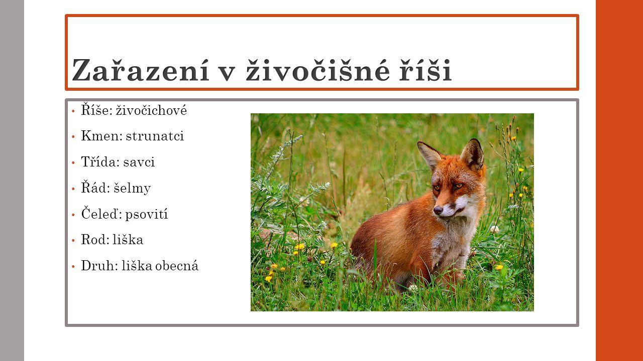 Říše: živočichové Kmen: strunatci Třída: savci Řád: šelmy Čeleď: psovití Rod: liška Druh: liška obecná