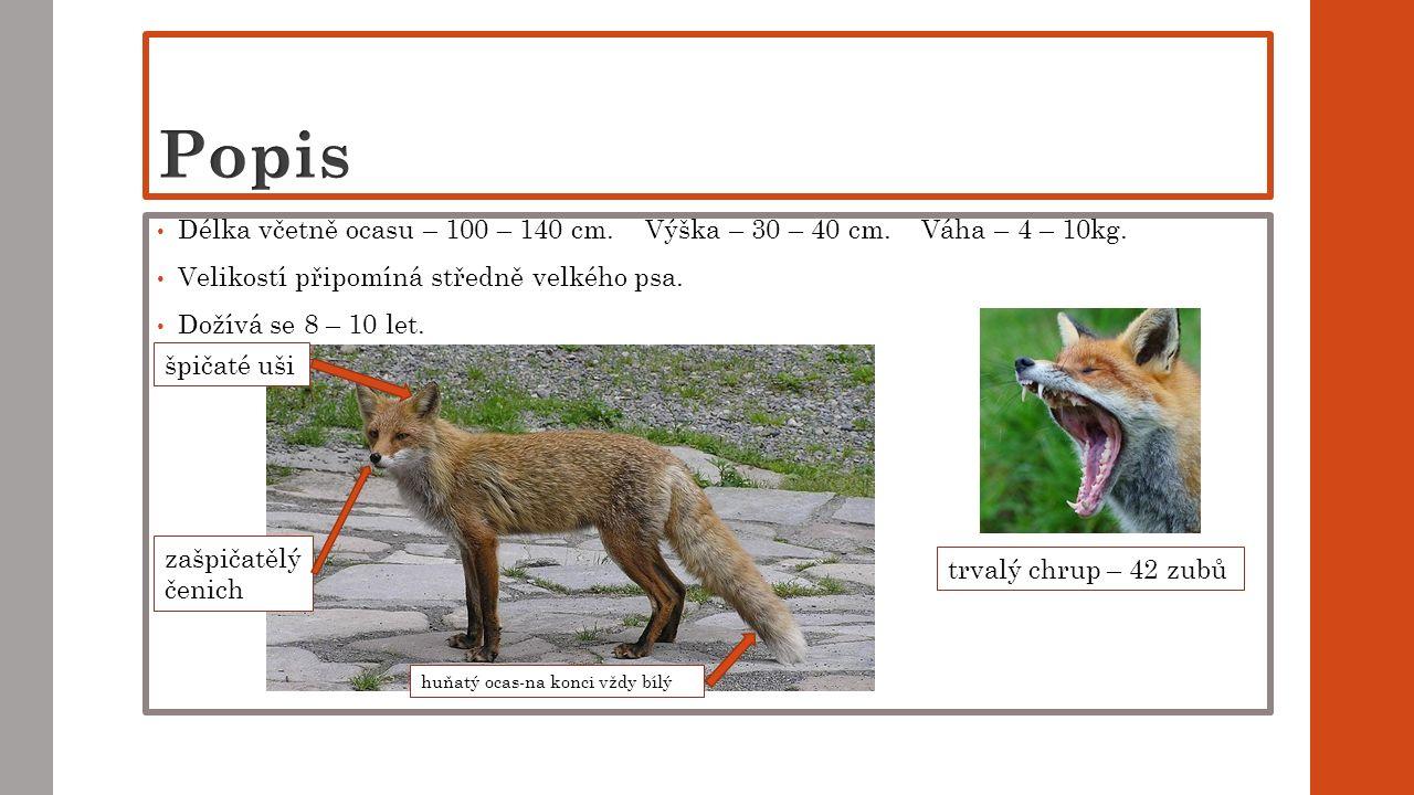 Délka včetně ocasu – 100 – 140 cm. Výška – 30 – 40 cm. Váha – 4 – 10kg. Velikostí připomíná středně velkého psa. Dožívá se 8 – 10 let. špičaté uši huň