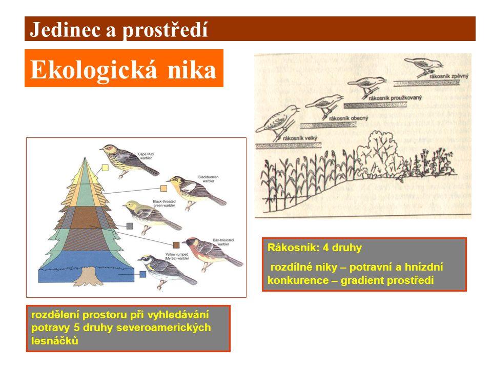 Jedinec a prostředí Ekologická nika rozdělení prostoru při vyhledávání potravy 5 druhy severoamerických lesnáčků Rákosník: 4 druhy rozdílné niky – pot