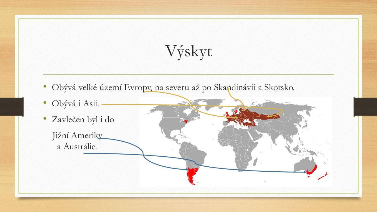 Výskyt Obývá velké území Evropy, na severu až po Skandinávii a Skotsko. Obývá i Asii. Zavlečen byl i do Jižní Ameriky a Austrálie.