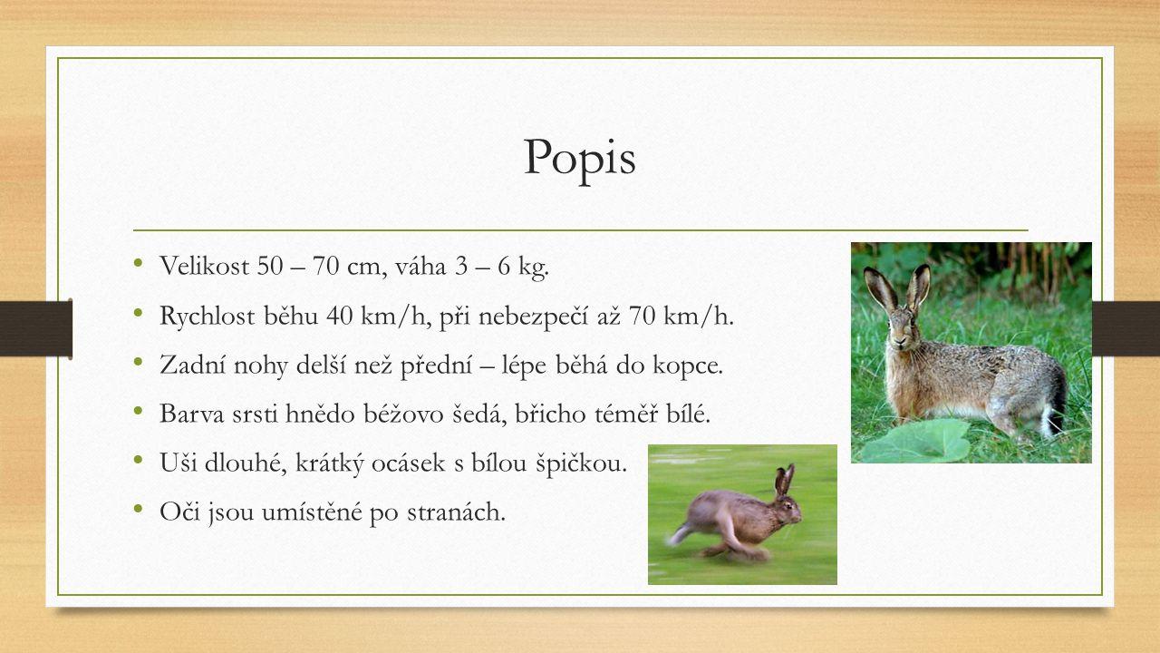 Popis Velikost 50 – 70 cm, váha 3 – 6 kg. Rychlost běhu 40 km/h, při nebezpečí až 70 km/h. Zadní nohy delší než přední – lépe běhá do kopce. Barva srs