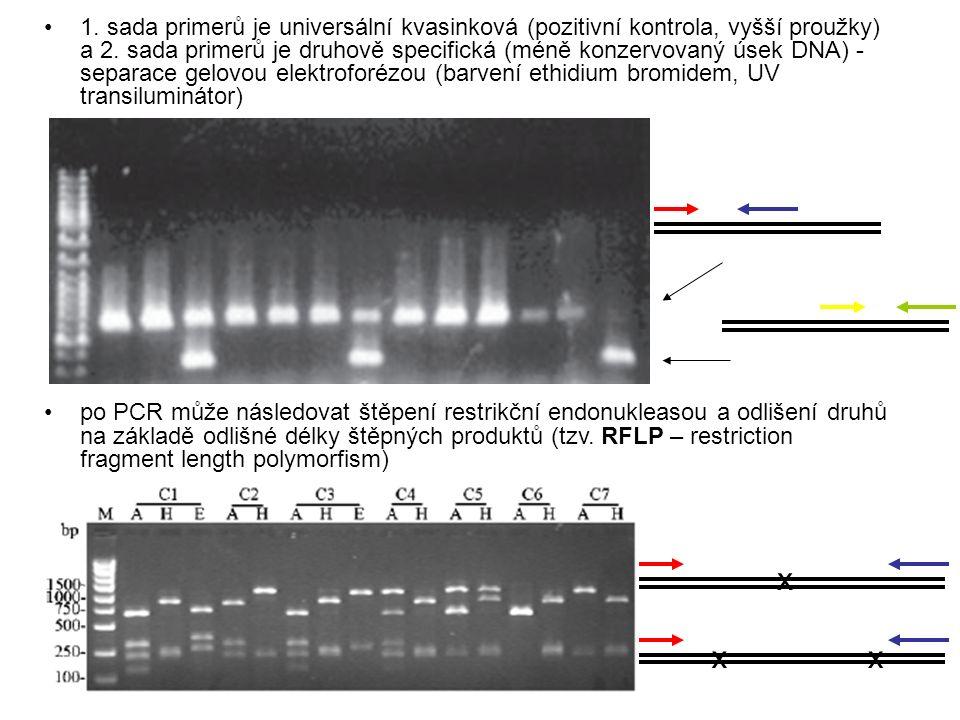 1. sada primerů je universální kvasinková (pozitivní kontrola, vyšší proužky) a 2. sada primerů je druhově specifická (méně konzervovaný úsek DNA) - s
