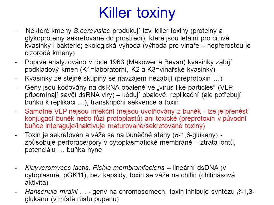 - Některé kmeny S.cerevisiae produkují tzv. killer toxiny (proteiny a glykoproteiny sekretované do prostředí), které jsou letální pro citlivé kvasinky