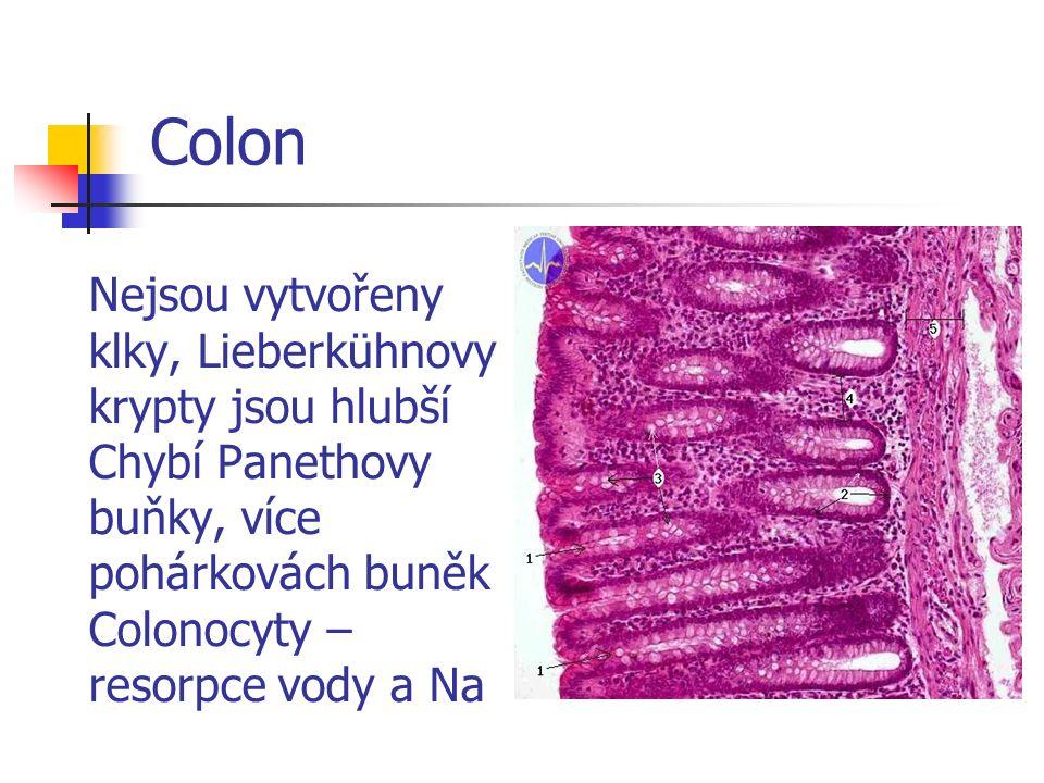 Apendix Apendix – lymfatická tkáň v lamina propria i v submucose -tonsila abdominalis