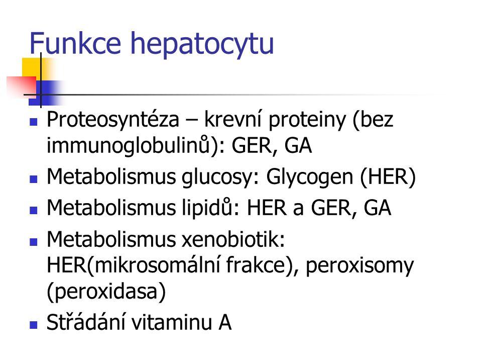 Žlučový kanálek Heringovy kanálky nebo žlučovody – kubické epitelové buňky Interlobulární žlučovody a větší vývody – cylindrický epitel