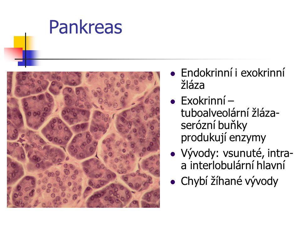 Endokrinní pankreas – Langerhansovy ostrůvky Trámce endokrinních buněk Hormony: Insulin Glukagon Somatostatin Pankreatický polypeptid