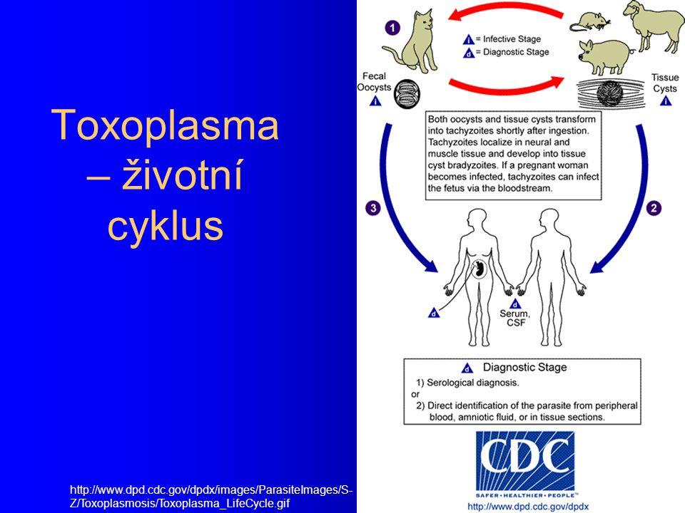 Toxoplasma gondii Vánoce jsou, padá vločka, toxoplasmu nese kočka (z básně O.