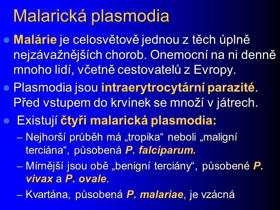 U některých osob ovšem může vzniknout například toxoplasmová retinitida… http://web.indstate.edu/thcme/mi cro/parasitology