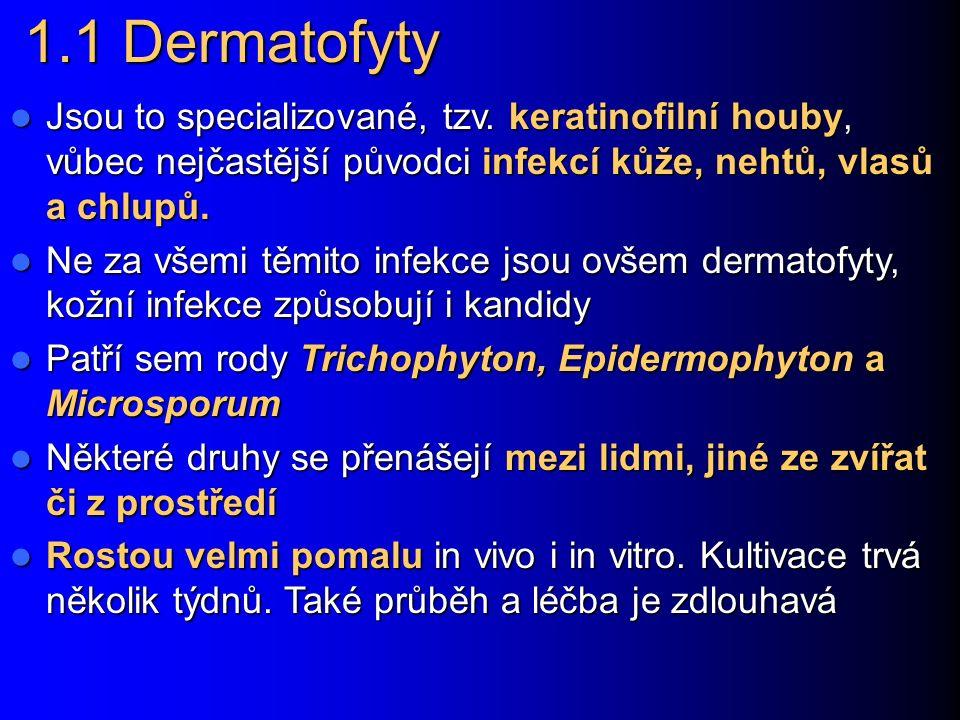 Speciální mykologie 1.