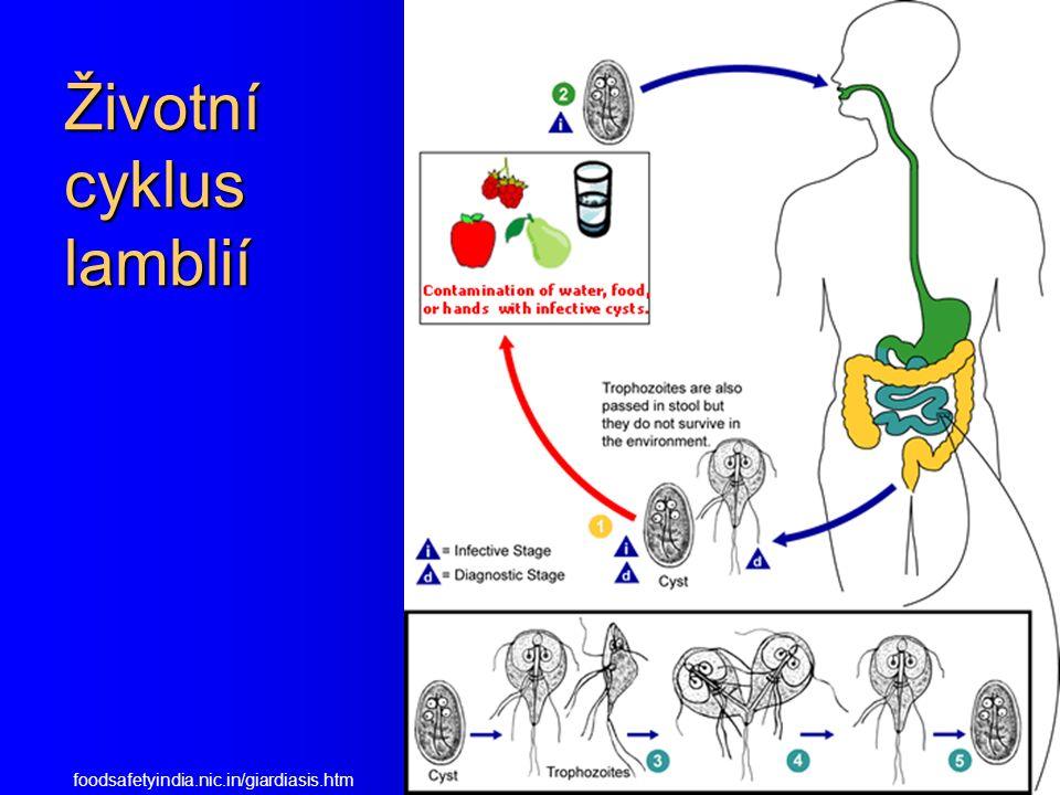 Giardia intestinalis – trofozoiti http://www.smittskyddsinstitutet.se/presstjanst/pressbilder/parasiter/