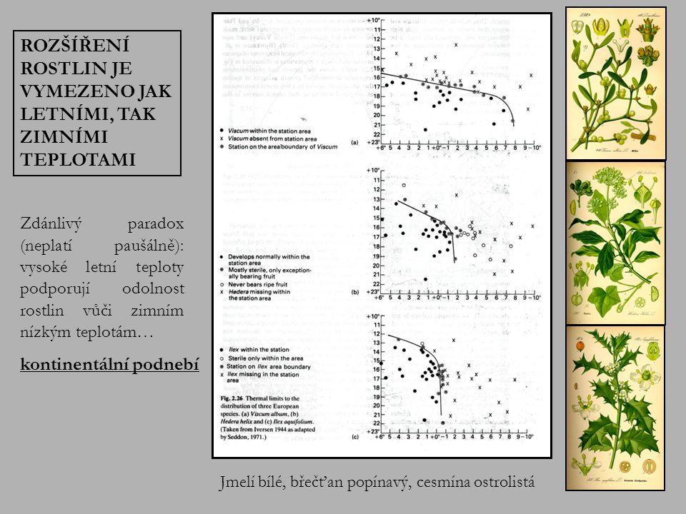 Jmelí bílé, břečťan popínavý, cesmína ostrolistá ROZŠÍŘENÍ ROSTLIN JE VYMEZENO JAK LETNÍMI, TAK ZIMNÍMI TEPLOTAMI Zdánlivý paradox (neplatí paušálně): vysoké letní teploty podporují odolnost rostlin vůči zimním nízkým teplotám… kontinentální podnebí