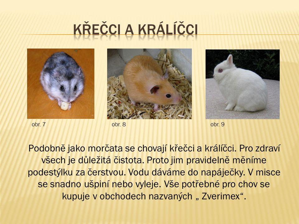 Podobně jako morčata se chovají křečci a králíčci.
