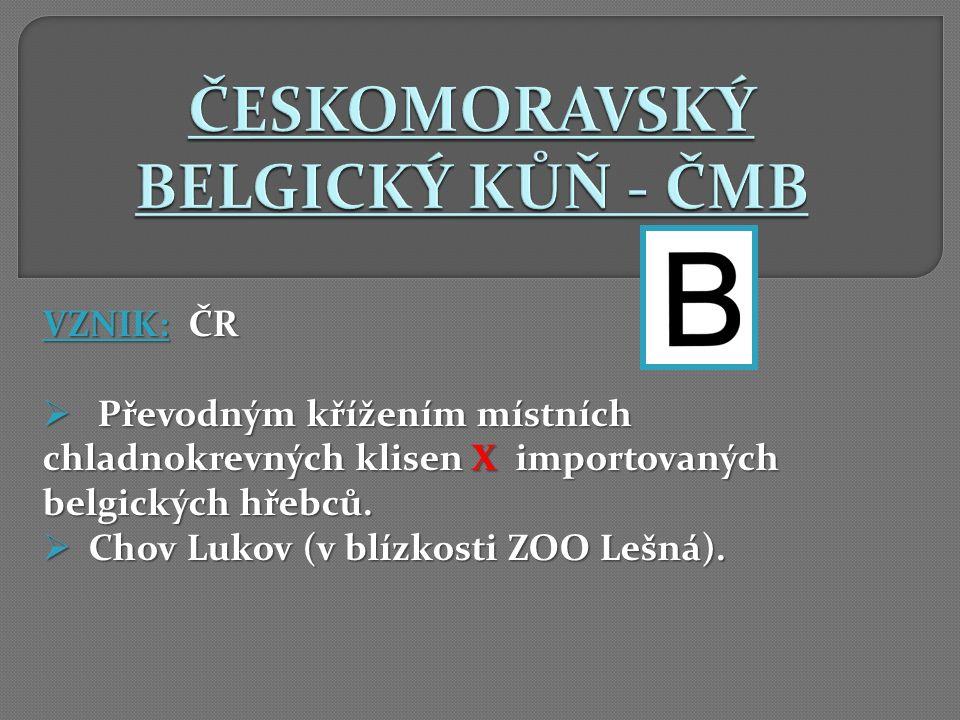 VZNIK: ČR  Převodným křížením místních chladnokrevných klisen X importovaných belgických hřebců.  Chov Lukov (v blízkosti ZOO Lešná).