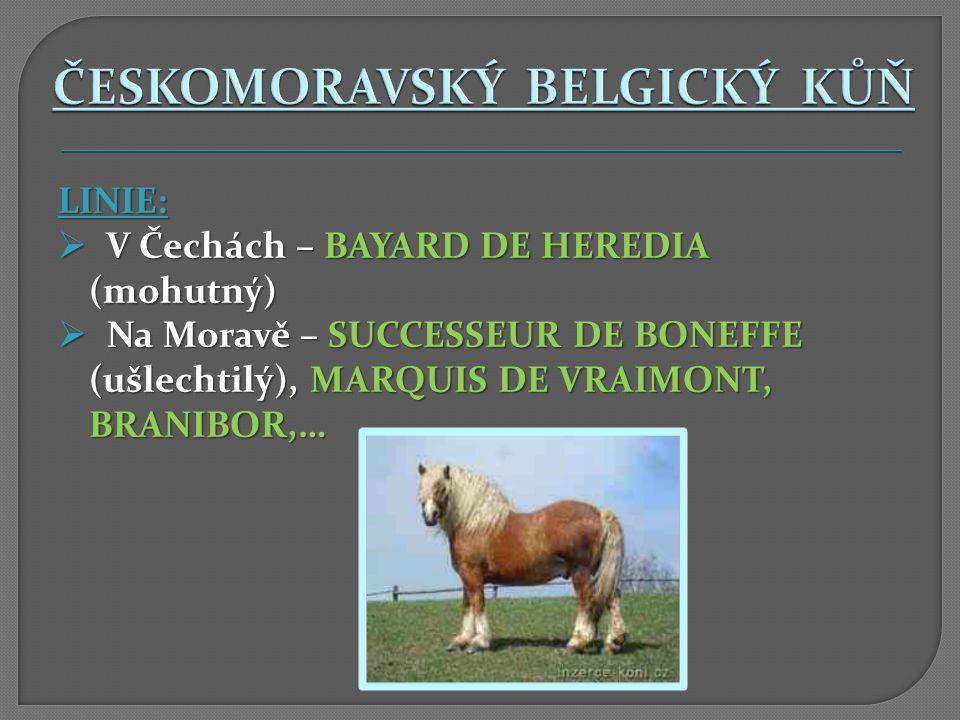 LINIE:  V Čechách – BAYARD DE HEREDIA (mohutný)  Na Moravě – SUCCESSEUR DE BONEFFE (ušlechtilý), MARQUIS DE VRAIMONT, BRANIBOR,…