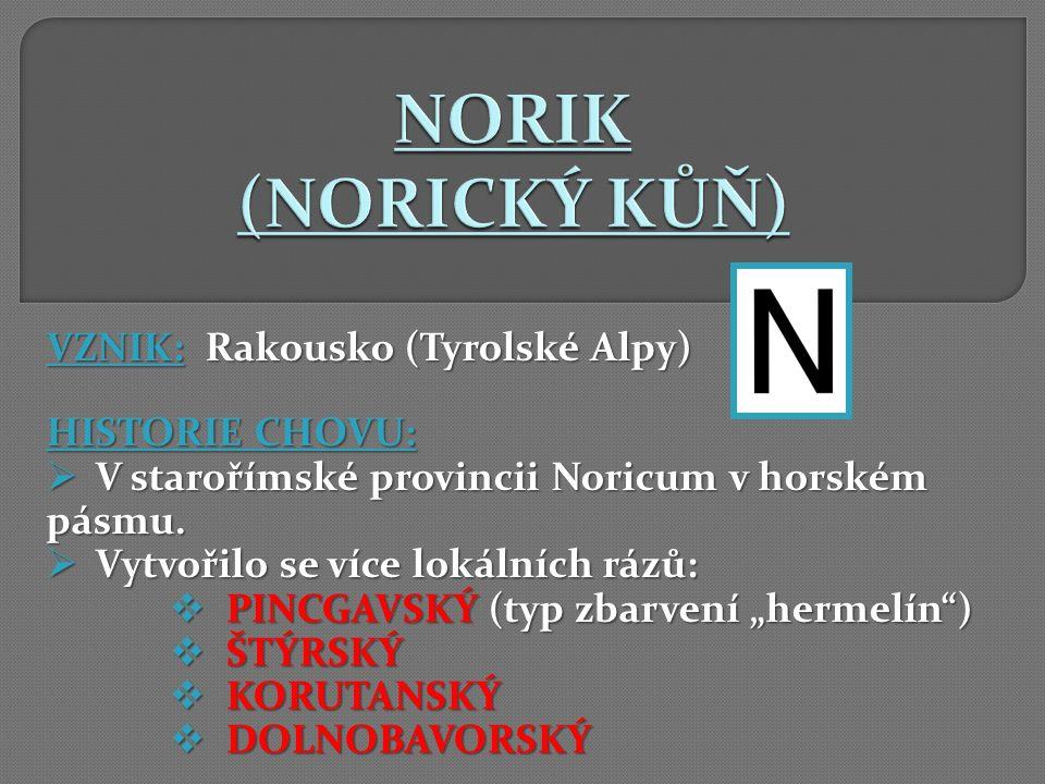 VZNIK: Rakousko (Tyrolské Alpy) HISTORIE CHOVU:  V starořímské provincii Noricum v horském pásmu.  Vytvořilo se více lokálních rázů:  PINCGAVSKÝ (t