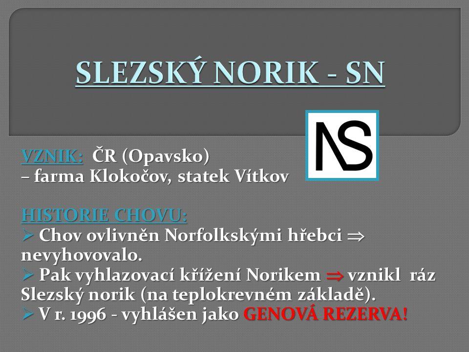 VZNIK: ČR (Opavsko) – farma Klokočov, statek Vítkov HISTORIE CHOVU:  Chov ovlivněn Norfolkskými hřebci  nevyhovovalo.
