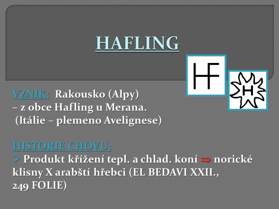VZNIK: Rakousko (Alpy) – z obce Hafling u Merana. (Itálie – plemeno Avelignese) (Itálie – plemeno Avelignese) HISTORIE CHOVU:  Produkt křížení tepl.