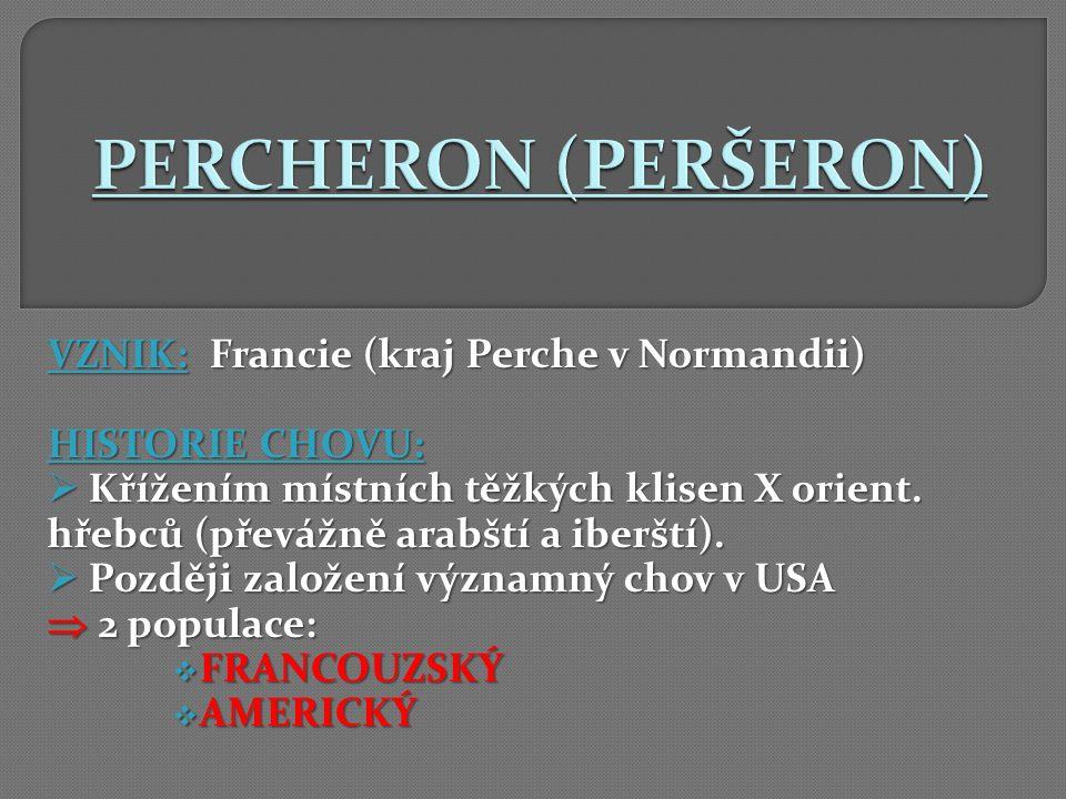 VZNIK: Francie (kraj Perche v Normandii) HISTORIE CHOVU:  Křížením místních těžkých klisen X orient. hřebců (převážně arabští a iberští).  Později z