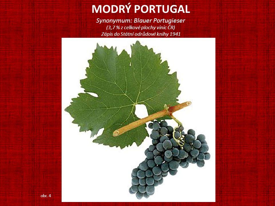 MODRÝ PORTUGAL Synonymum: Blauer Portugieser (3,7 % z celkové plochy vinic ČR) Zápis do Státní odrůdové knihy 1941 obr. 4