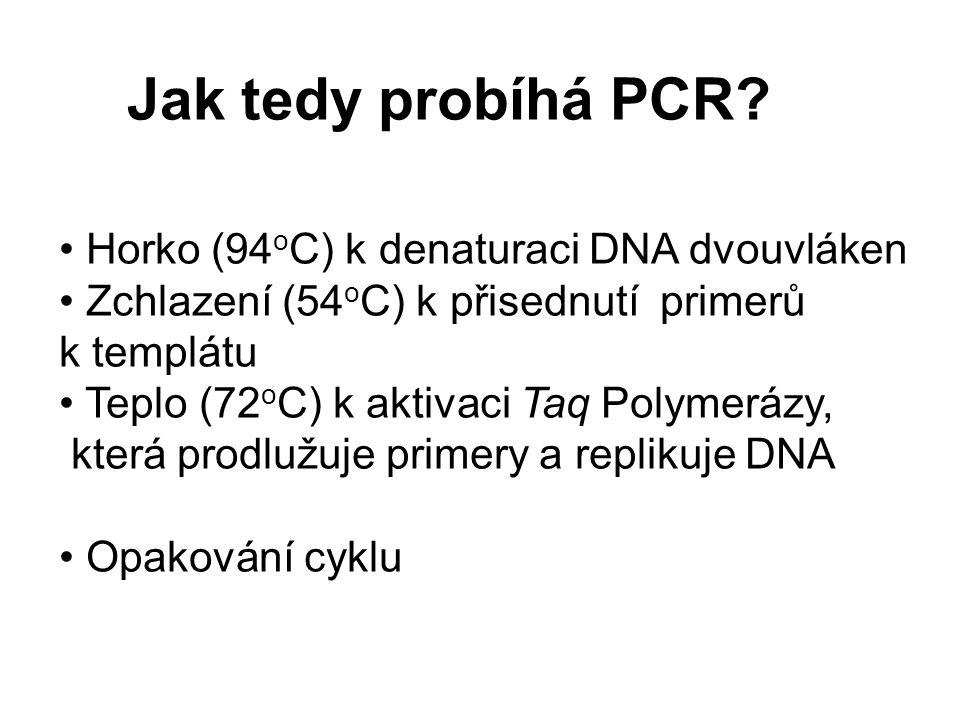Jak tedy probíhá PCR? Horko (94 o C) k denaturaci DNA dvouvláken Zchlazení (54 o C) k přisednutí primerů k templátu Teplo (72 o C) k aktivaci Taq Poly