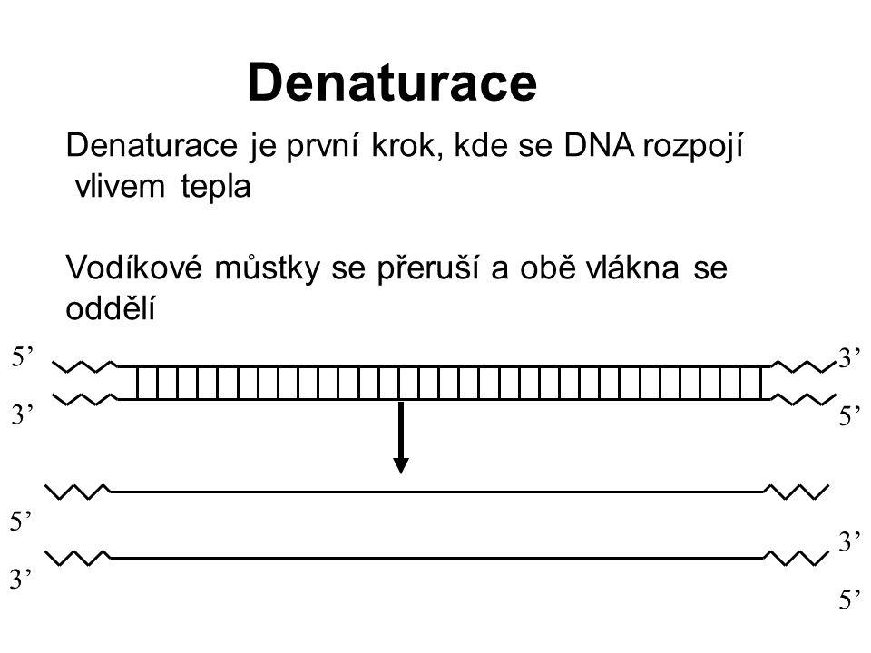 Denaturace 3' 5' Denaturace je první krok, kde se DNA rozpojí vlivem tepla Vodíkové můstky se přeruší a obě vlákna se oddělí 5' 3' 5' 3' 5'