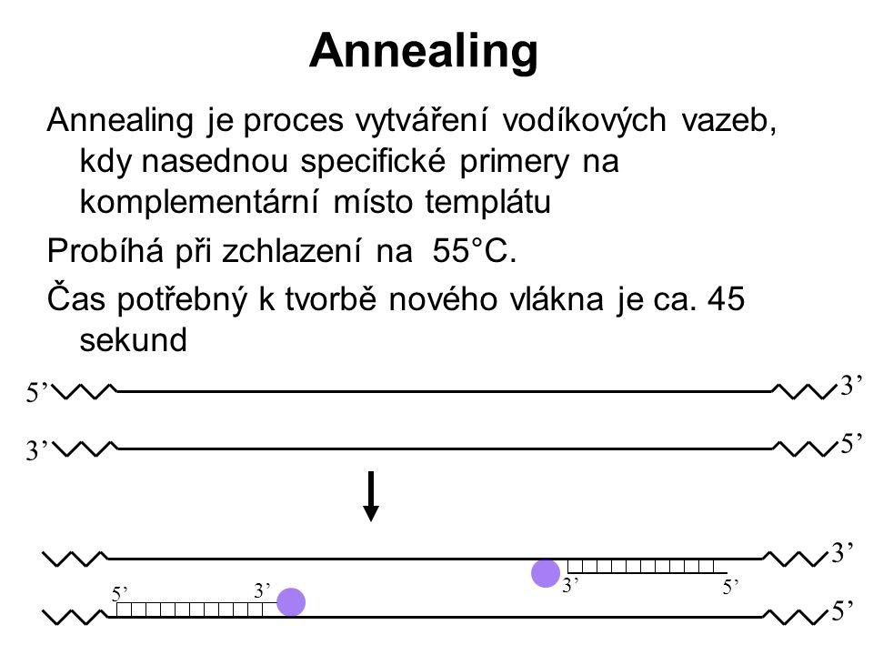 Annealing Annealing je proces vytváření vodíkových vazeb, kdy nasednou specifické primery na komplementární místo templátu Probíhá při zchlazení na 55