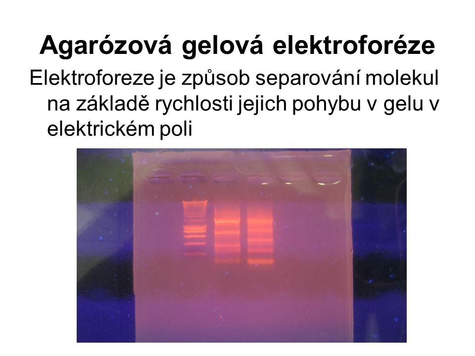 Agarózová gelová elektroforéze Elektroforeze je způsob separování molekul na základě rychlosti jejich pohybu v gelu v elektrickém poli