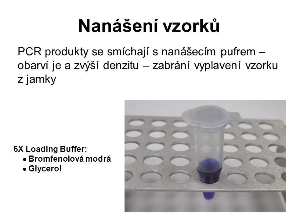 6X Loading Buffer:  Bromfenolová modrá  Glycerol Nanášení vzorků PCR produkty se smíchají s nanášecím pufrem – obarví je a zvýší denzitu – zabrání v