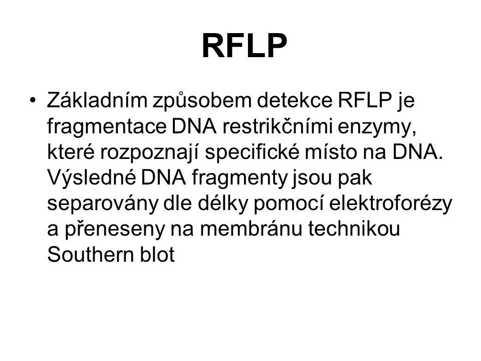 RFLP Základním způsobem detekce RFLP je fragmentace DNA restrikčními enzymy, které rozpoznají specifické místo na DNA. Výsledné DNA fragmenty jsou pak