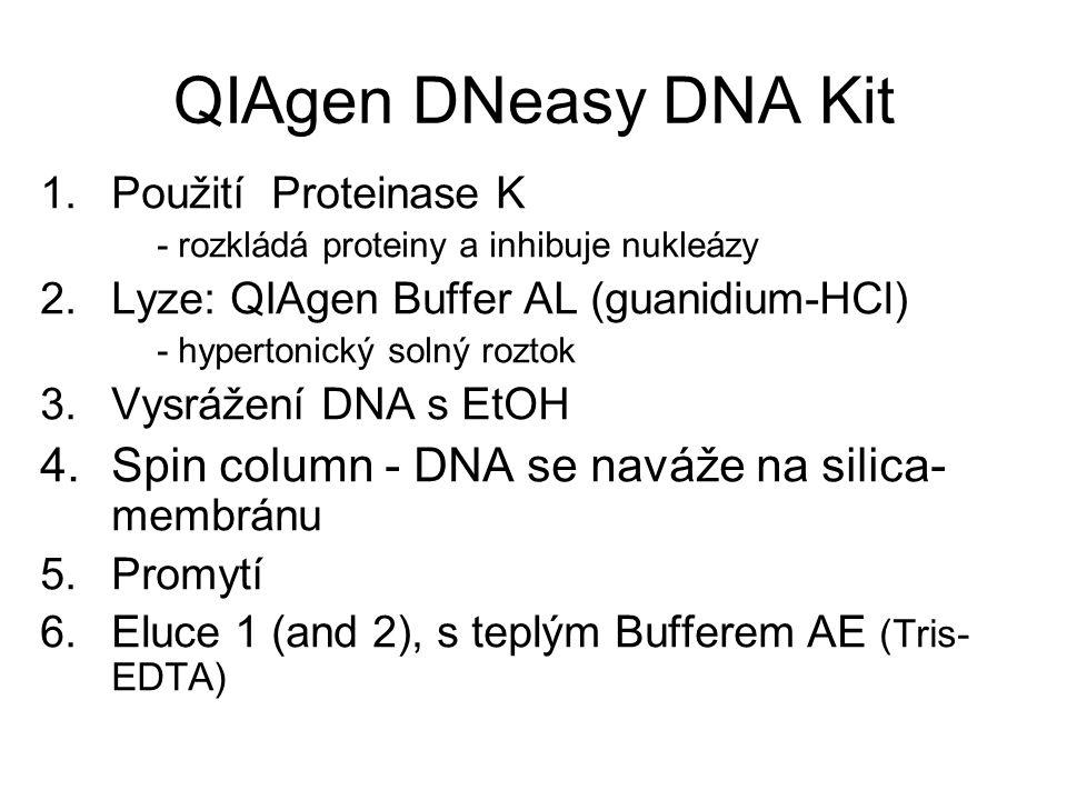 QIAgen DNeasy DNA Kit 1.Použití Proteinase K - rozkládá proteiny a inhibuje nukleázy 2.Lyze: QIAgen Buffer AL (guanidium-HCl) - hypertonický solný roz