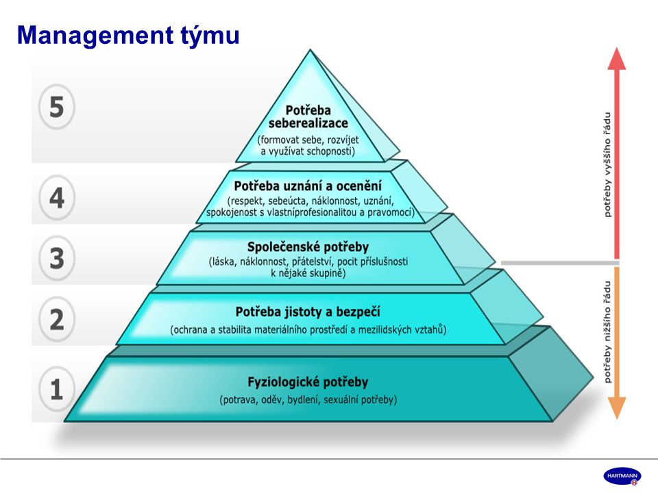 Management týmu
