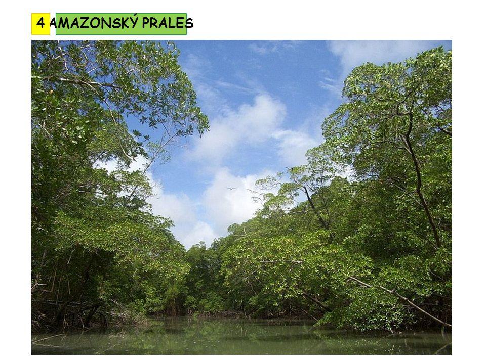 AMAZONSKÝ PRALES4