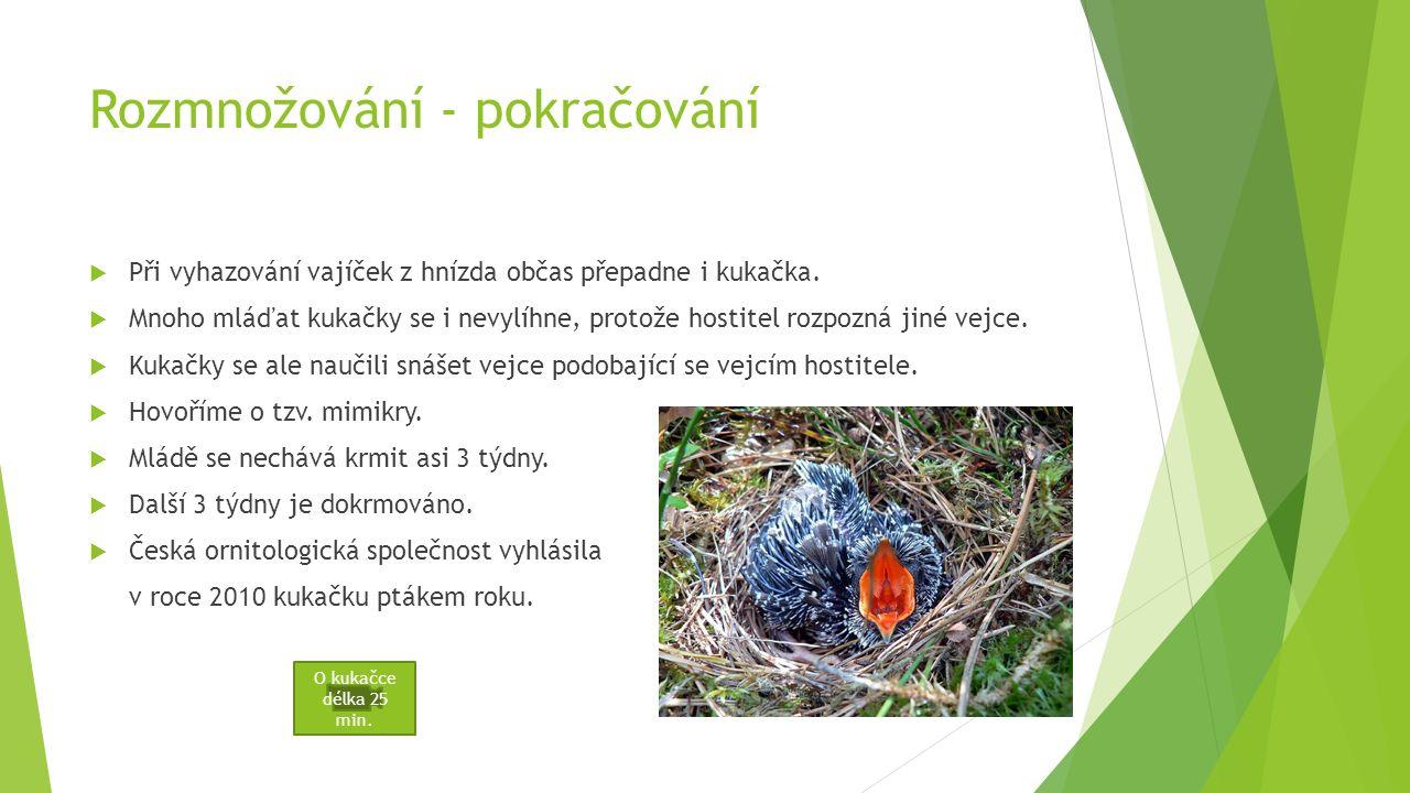 Rozmnožování  Nežije v párech.  Vejce snášejí do cizích hnízd, 10 – 20 za sezonu.  Jedná se o hnízdní parazitismus.  Využívají hnízda hmyzožravých