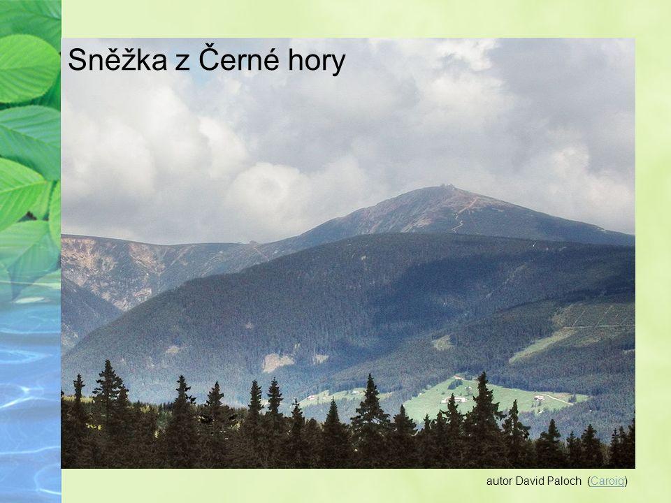Autor: Kozuch