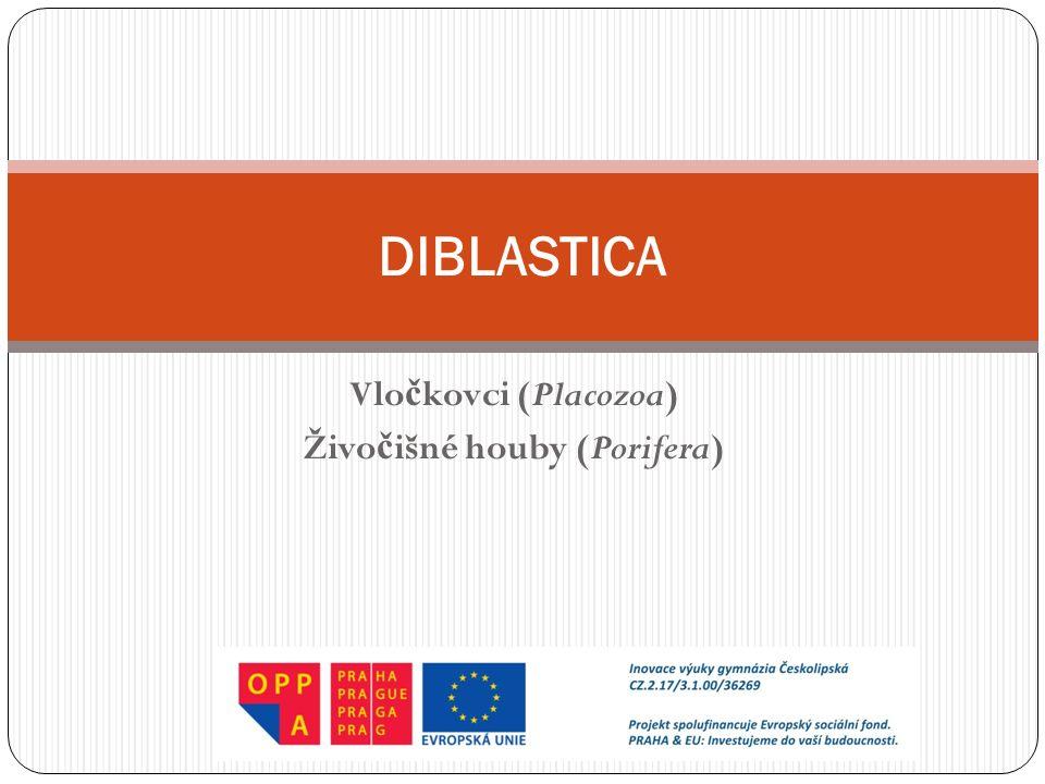 Vlo č kovci (Placozoa) Živo č išné houby (Porifera) DIBLASTICA